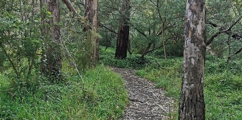 Darebin-bush-path