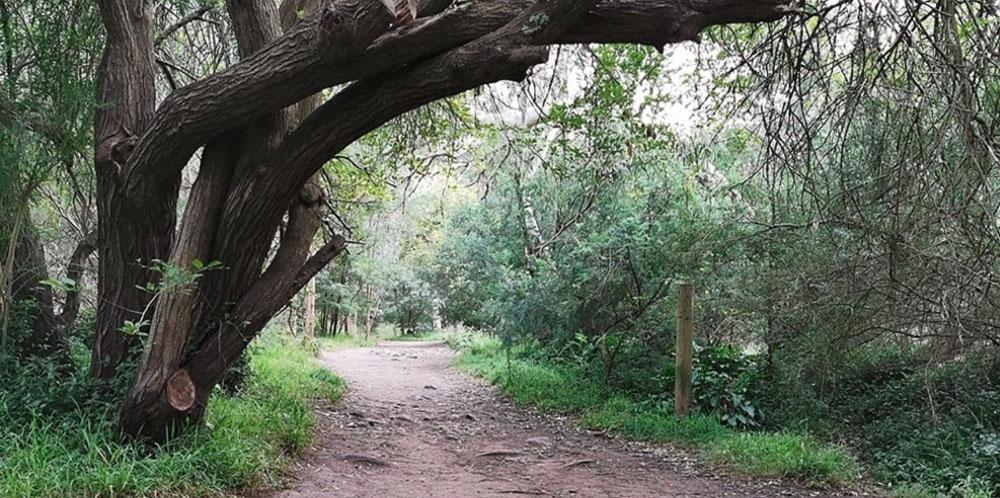 Darebin-overhanging-tree